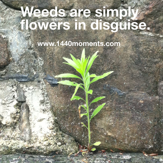 Flowers in Disguise…